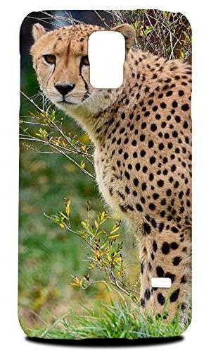 african cheetah animal 5 hard